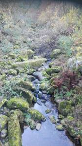 black-forrest-river