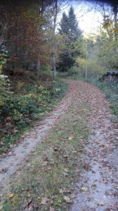 black-forrest-trail